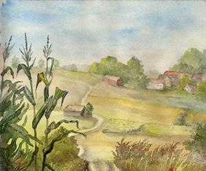 Maisfeld bei Neumühle