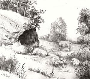 Schafe, Schafweide